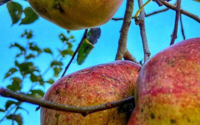 Mela Day – 17 e 18 Ottobre Agriturismo Zaro